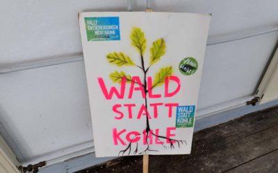 INTO THE TREES – Waldbilder – Ausstellung in der Galerie Incontro, Eitorf